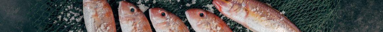 Nos promotions sur le poisson et les crustacés