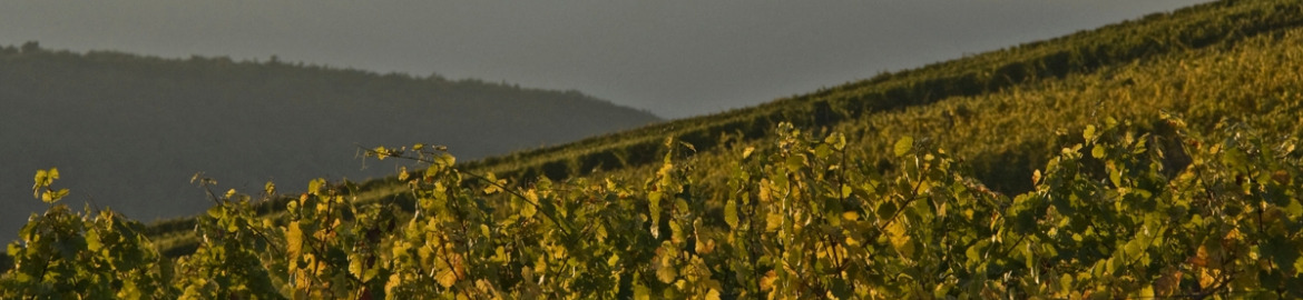 Nos vins en direct du vignoble alsacien