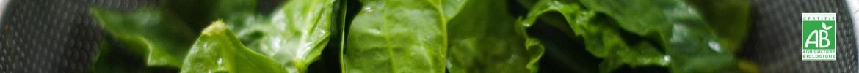 Nos légumes bio