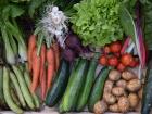 Julien Bouche - Maraîcher Bio - Petit Panier De Légumes Bio - 3kg