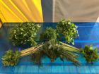 La Boite à Herbes - Le Panier Des Herbes