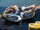 Les huîtres Gaboriau Frères - 36 Huîtres Fines Charente Maritime N°3