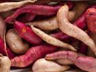 Le Jardin des Gallines - Patates Douces 1kg
