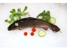 Mapoissonnière - Saumon De Fontaine - Lot De 1 Kg
