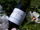 Domaine Sophie Joigneaux - AOP Bourgogne-Aligoté 6x75cl Millésime 2017