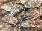 AQUADIS NATURELLEMENT - 24 Huîtres Creuses De Bretagne  N°3
