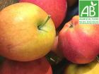 Mon Petit Producteur - Pomme Dalinette Bio - 1kg