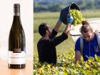 PinotBleu - Coffret de 6 Chassagne-Montrachet AOC Bio, Bourgogne Chassagne-Montrachet du Domaine Morey-Coffinet, 2017