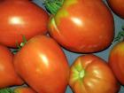 Multiproductions - Cédric Joliveau - Tomate Cœur De Bœuf 1kg