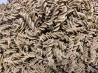 Comme des Gorets - Tire-bouchon Epeautre Nature Bio en Vrac 10kg