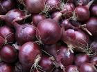 Le Jardin des Gallines - Oignons Rouges, 1 Kg