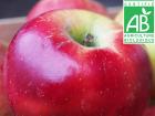 Mon Petit Producteur - Pomme Melrose Bio - 1kg