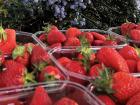 Valentin Grain - Fruits et légumes Conversion Bio - Fraises Pour Confiture En Conversion Biologique - 500g