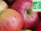 Mon Petit Producteur - Pomme Bio Elstar - 1kg