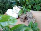 Ferme Caussanel - NOUVEAUTÉ : Rillettes de canard au Pistou : Rillett ' O Pistou