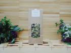 Epione - Infusion Fleurs D'acacia