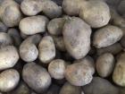 Multiproductions - Cédric Joliveau - Pomme De Terre Agria, 3kg