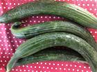 Valentin Grain - Fruits et légumes Conversion Bio - Concombre - 1kg