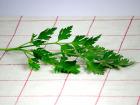 La Boite à Herbes - Persil Plat Frais - Sachet 100g