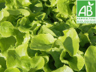 Mon Petit Producteur - Salade Feuille De Chene