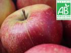 Mon Petit Producteur - Pomme Pinova Bio - 3kg