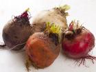 Le Jardin des Gallines - Betteraves Couleurs En Mélange Crues 1kg