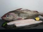 Pêcheries Les Brisants - Dos d'Eglefin - Pelé - Lot de 1kg