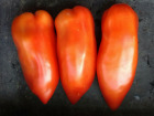 Multiproductions - Cédric Joliveau - Tomate Andine Cornue 1kg