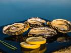 Les huîtres Gaboriau Frères - 48 Huîtres Spéciales N°2