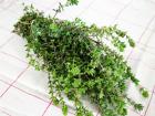 La Boite à Herbes - Thym Frais - Sachet 50g