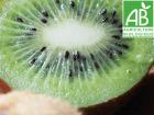 Mon Petit Producteur - Kiwi Hayward Vert Bio [la Pièce De 90g]