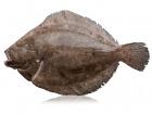Qwehli - Barbue Éviscérée - 2 À 3 Kg
