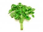 Les Herbes du Roussillon - Basilic Frais
