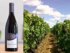 """PinotBleu - Coffret de 6 Vosne-Romanée AOC Bio, Bourgogne""""Vosne-Romanée"""" du Domaine Vincent Legou, millésime 2016"""