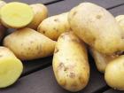 La Ferme du Bois Ramard - Pommes De Terre Pompadour En Conversion Bio 1kg