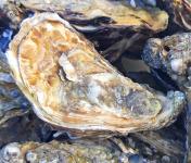 Le Panier à Poissons - Les perles du Croisic - Huitre creuse N°3  - 36pièces (3 douzaines)