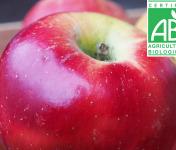 Mon Petit Producteur - Pomme Melrose Bio - 3kg