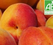 Mon Petit Producteur - Abricot [vendu Par 1kg]