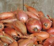 La Ferme du Polder Saint-Michel - Echalotes Bio Filet 3kg