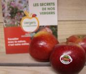 Le Châtaignier - Pommes Conversion Bio -  Assortiment 6kg