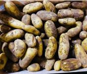 Maison Argentain - Pommes De Terre Charlotte - 1kg