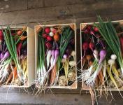Le Jardin des Roys - Lot De 3 Colis Mini Légumes
