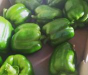 Au Champ - Les bio p'tits légumes - Poivrons Verts Bio (x2) - environ 330 gr