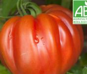 Mon Petit Producteur - Tomate Bio Coeur De Boeuf