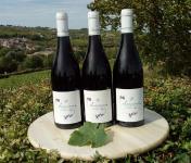 Sancerre Doudeau-Leger - Sancerre Rouge Aoc 2019 - 3 Bouteilles