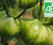 Mon Petit Producteur - Tomate Ancienne Bio Green Zebra
