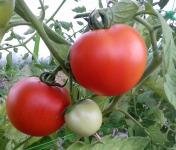 Multiproductions - Cédric Joliveau - Tomate Ronde Rouge, 3kg