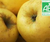 Mon Petit Producteur - Pomme Tentation Bio - 3 Kg