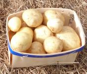 Ferme des petites Brossardières - Pomme de terre primeur bio - barquette de 500 g