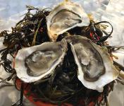 Huîtres Le Priol - Huîtres Creuses De Bretagne N°4 - Bourriche De 50